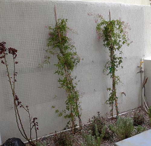 Κήπος στο Κερατσίνι